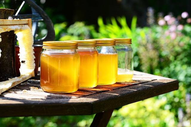 Pszczoły i miód – piknik pszczelarski w Olsztynie